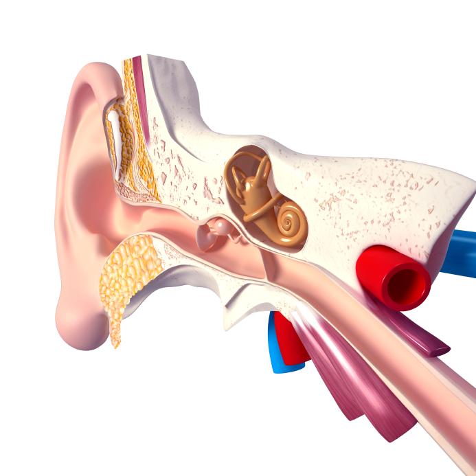 סכימה של אוזן